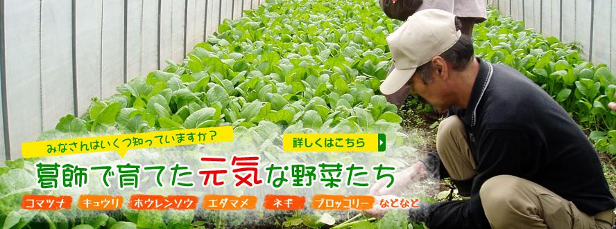 みなさんはいくつ知っていますか?葛飾で育てた元気な野菜たち